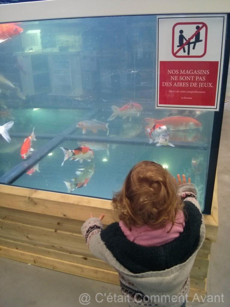 Regarder les poissons (même si le magasin n'est pas une aire de jeu!)