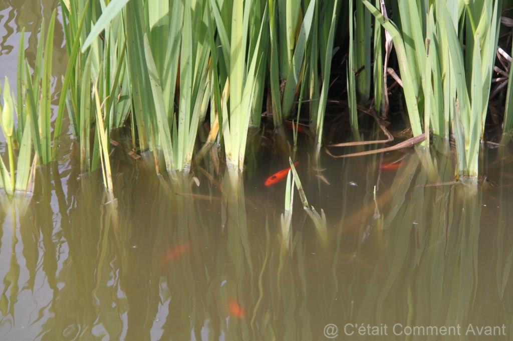 S'arrêter pour compter les poissons rouges
