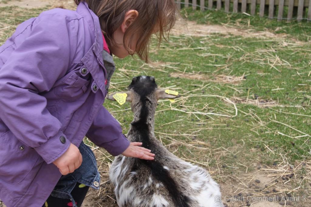 Dans la partie ferme, Melle pikotine a adoré caresser les biquettes !