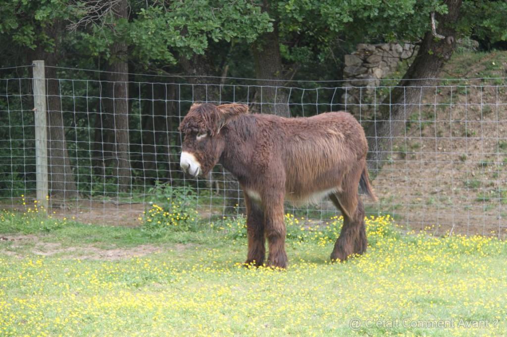 Il doit être têtu mais il est beau cet âne !