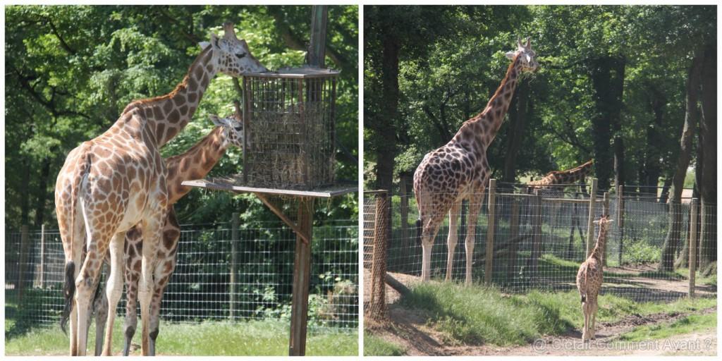 j'adore le girafon !