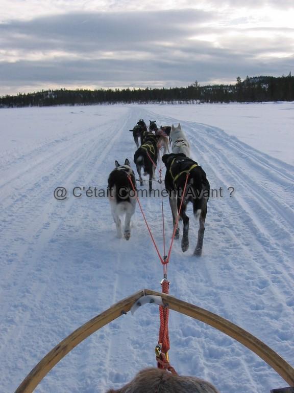 Chiens de traîneau à Kiruna (Laponie Suédoise)