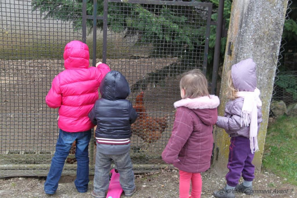 Aller voir les poules