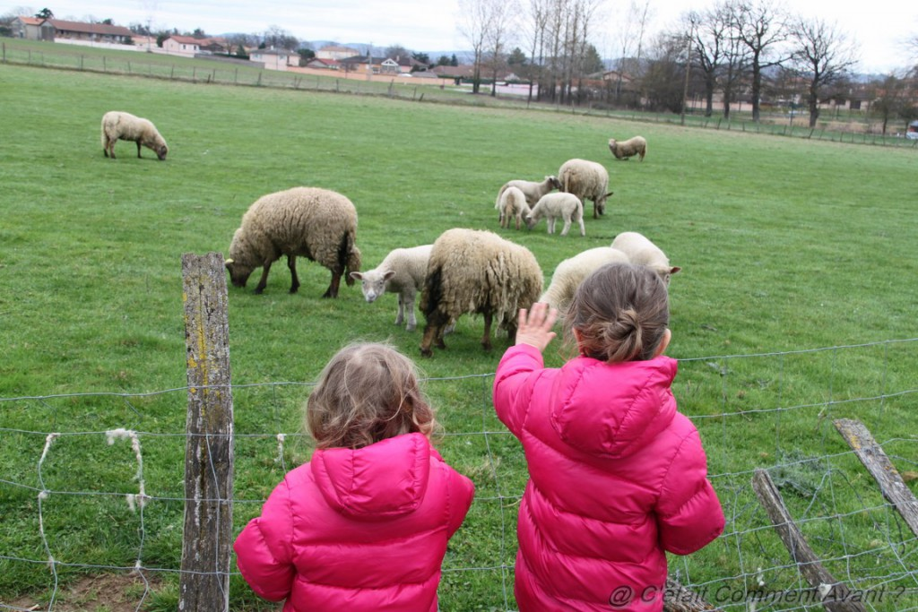 Faire coucou aux moutons, again