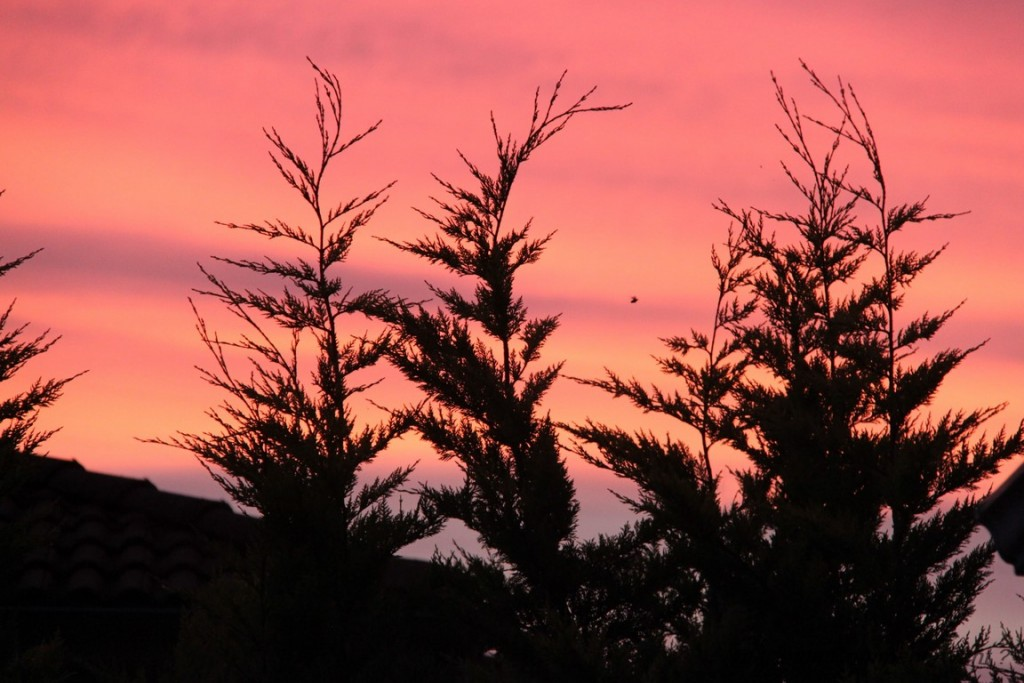 Avoir de superbes couleurs chaque soir dans le ciel