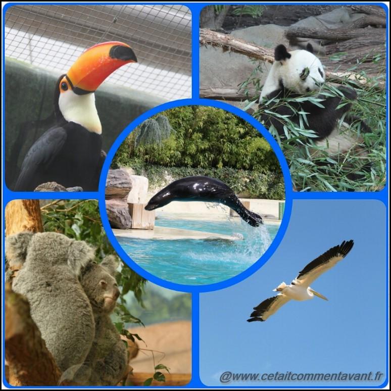 Adorer la journée au Zoo de Beauval